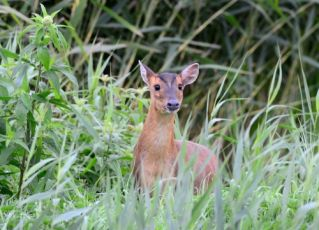 3 ways to stop deer damaging your garden