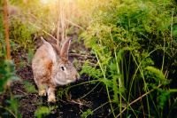 Avoid rabbit damage