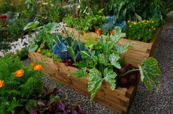 10 ways to get started in organic gardening