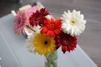 Flower of the month: Gerbera
