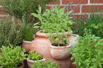 Garden tips: How to get more out of your herbs